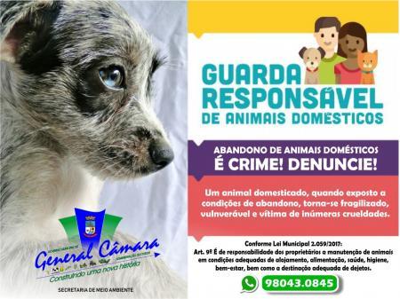 Abandono de animais domésticos é crime.
